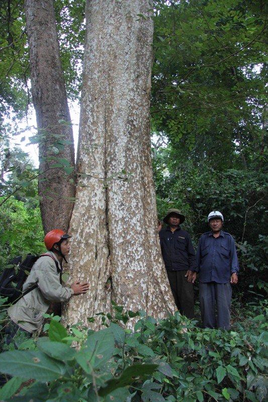 Rừng nguyên sinh Cư H'Lâm với hàng ngàn cây gỗ quý lớn đến 3-4 vòng tay người lớn ôm. Nếu được đầu tư xây dựng khu du lịch, nguy cơ phá vỡ sinh thái, làm mất không gian văn hóa thiêng của đồng bào nơi đây.
