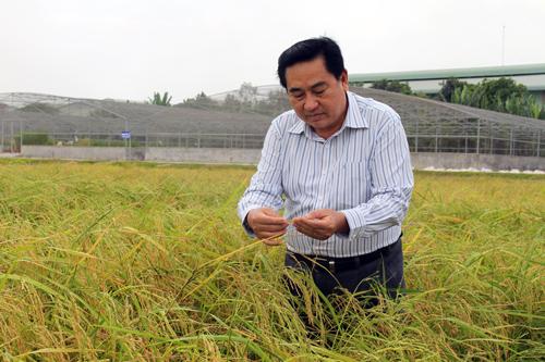 PGS.TS Dương Văn Chín cho rằng, cố đưa nước ngọt vào vùng có nguy cơ nhiễm mặn cao để trồng lúa là rất nguy hiểm