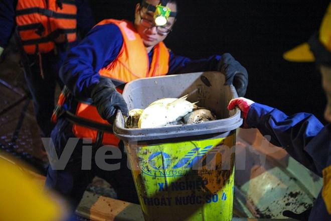 Cá vớt được trên thuyền sẽ được mang ngay đến xe chở rác và mang đi tiêu hủy. (Ảnh: Minh Sơn/Vietnam+)