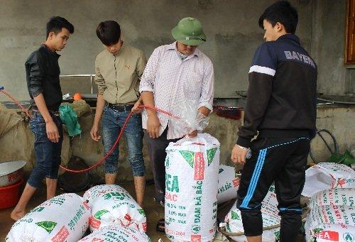 Anh Trần Văn Trí, một hộ thu mua cá chép khá lớn của làng nghề cho hay, năm nay nhà anh thu mua của gần 20 hộ, với tổng số cá lên tới 2,5 tấn.Trừ thuê nhân công, thức ăn cho cá, ước tính thu lãi gần 100 triệu đồng/ vụ. Các khách buôn của anh chủ yếu ở 6 tỉnh phía Bắc. Ảnh: Lê Linh
