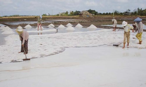 Diêm dân ấp Mù U, xã Dân Thành, Duyên Hải (Trà Vinh) đang vào mùa thu hoạch muối đông ken.