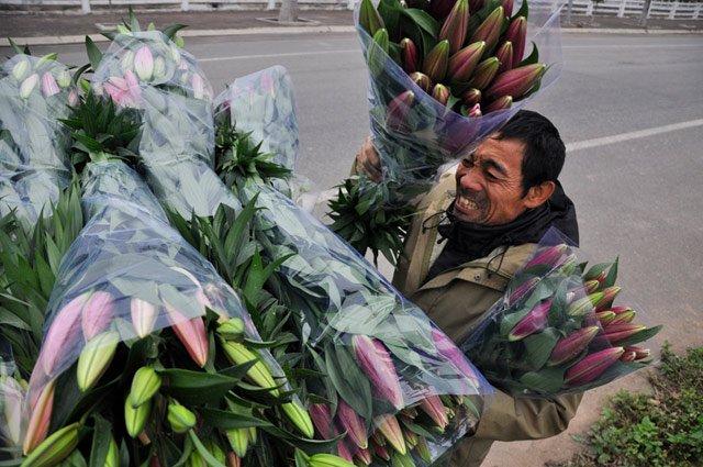 """Nhà trồng 1,3 mẫu hoa ly nở sớm trượt Tết, ông Nguyễn Tự Điệp (53 tuổi) ở xã Thượng Mỗ buồn rầu: """"Đau xót quá, cả năm trông vụ hoa ăn Tết mà giờ trắng tay cả rồi""""."""