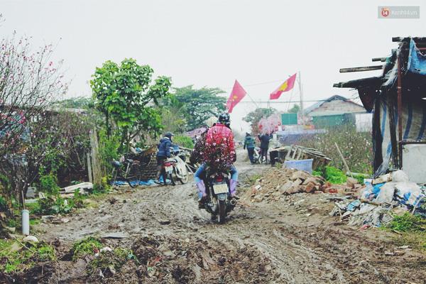 Các chuyến xe chở theo hoa đào tấp nập chạy liên tục quanh các ruộng đào ở Nhật Tân.
