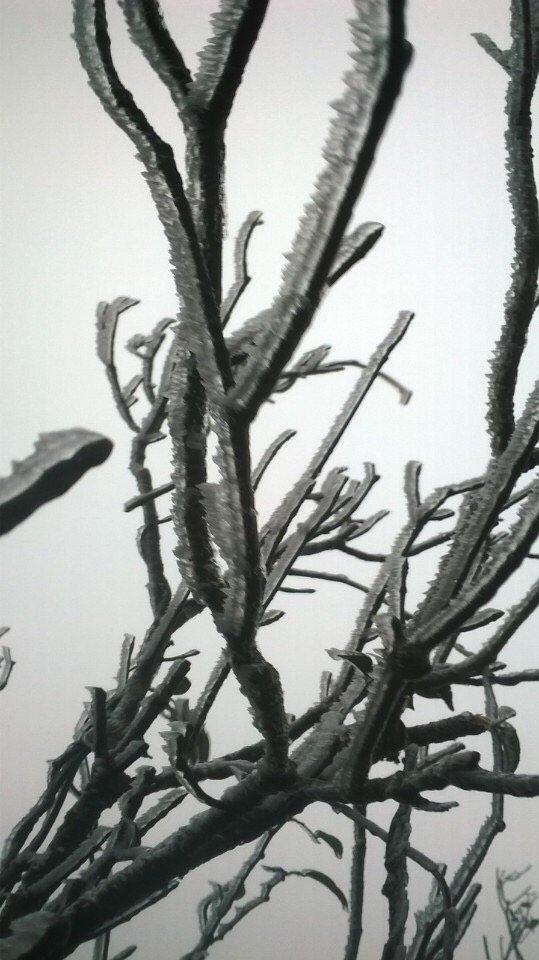 Hình ảnh tuyết rơi ở Ba Vì được cộng đồng mạng chia sẻ sáng nay.