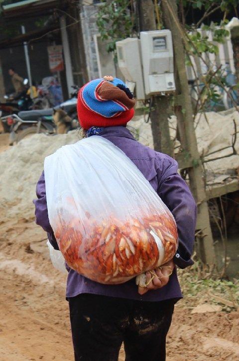 Cá chép Thủy Trầm theo chân các thương lái về Hà Nội. Ảnh: Lê Linh