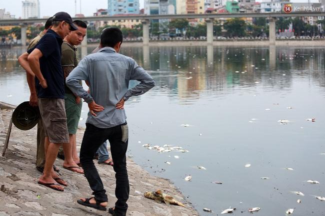 Đến cuối giời chiều, tại khu vực kè đường Mai Anh Tuấn xác cá trôi dạt vào rất nhiều.