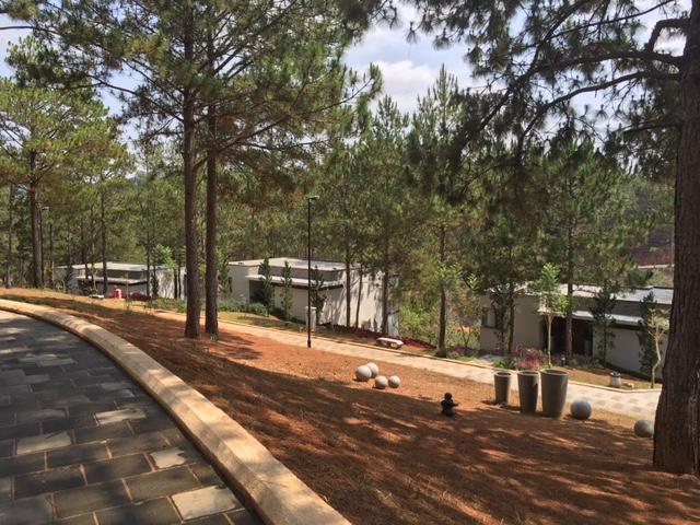 Các căn biệt thự mọc lên giữa rừng thông. Theo một nhà đầu tư có kinh nghiệm về đầu tư các khu resort, những cánh rừng thông này có thể tiết kiệm cho chủ đầu tư hàng triệu đôla vì không phải đầu tư vào cảnh quan cây xanh