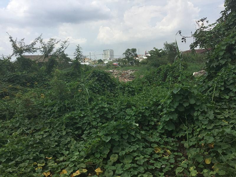 Nhiều người thấy xót xa khi nhìn thấy khu đất vàng của Phương Trang bỏ hoang tại phường An Phú, quận 2