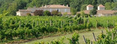 Vườn nho này sẽ là nguồn nguyên liệu cung cấp để sản xuất những loại rượu vang.