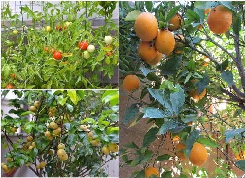 Trong vườn trồng khá nhiều loại cây, ngoài những cây ăn quả còn có các loại hoa như hoa sứ, hoa cúc, hoa hồng, cây ổi, cam...