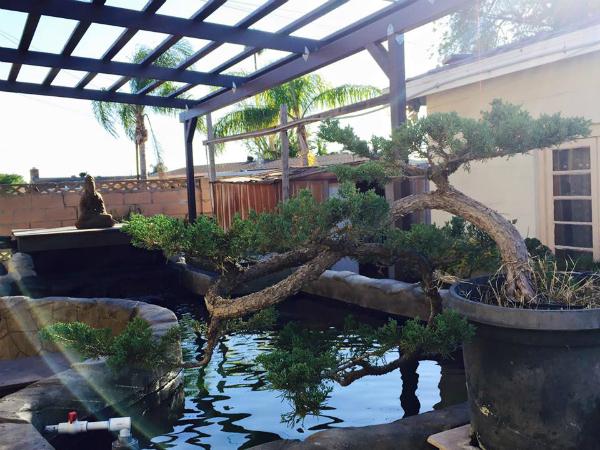 Phần lớn diện tích trong khu vườn được dùng để trưng bày những cây cảnh mà anh cất công tìm mua ở các nhà vườn và tự tay chăm sóc, cắt tỉa.