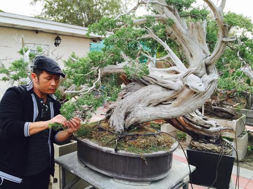 Việc chăm sóc những cây cảnh này đòi hỏi sự tỉ mỉ, chăm chút giúp anh giải tỏa căng thẳng.
