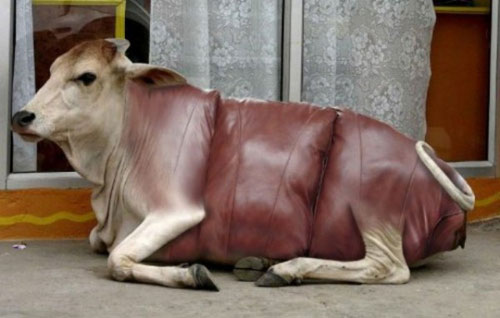Sofa hình chú bò đang nằm.