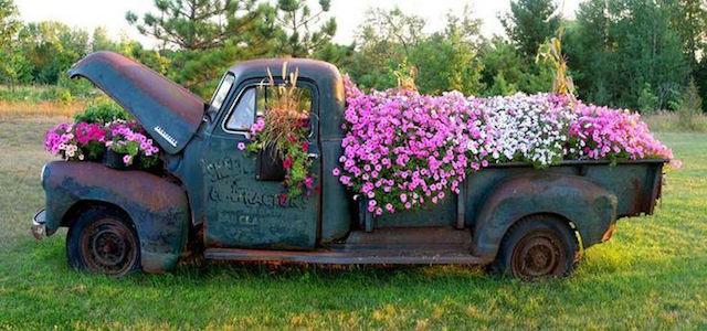 Thậm chí một chiếc xe bán tải cổ cũng sẽ trở thành vật trang trí lý tưởng cho vườn nhà bạn.