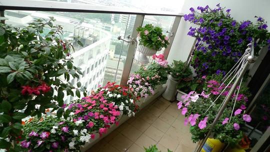 Với diện tích gần 6m2 , toàn bộ ban công nhà chị phủ đầy hoa.