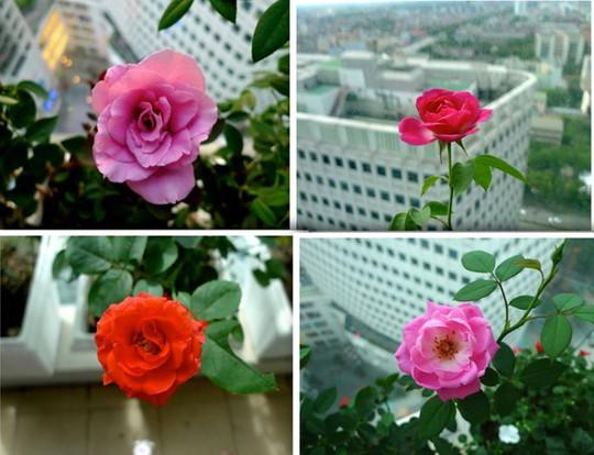 Với niềm đam mê cùng sự chăm sóc tỉ mỉ ban công nhà chị lúc nào cũng tràn ngập hương hoa.