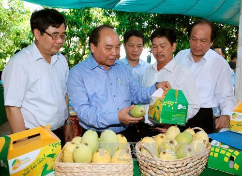 Thủ tướng Nguyễn Xuân Phúc thăm Hợp tác xã xoài Mỹ Xương, huyện Cao Lãnh. Ảnh: Thống Nhất/TTXVN