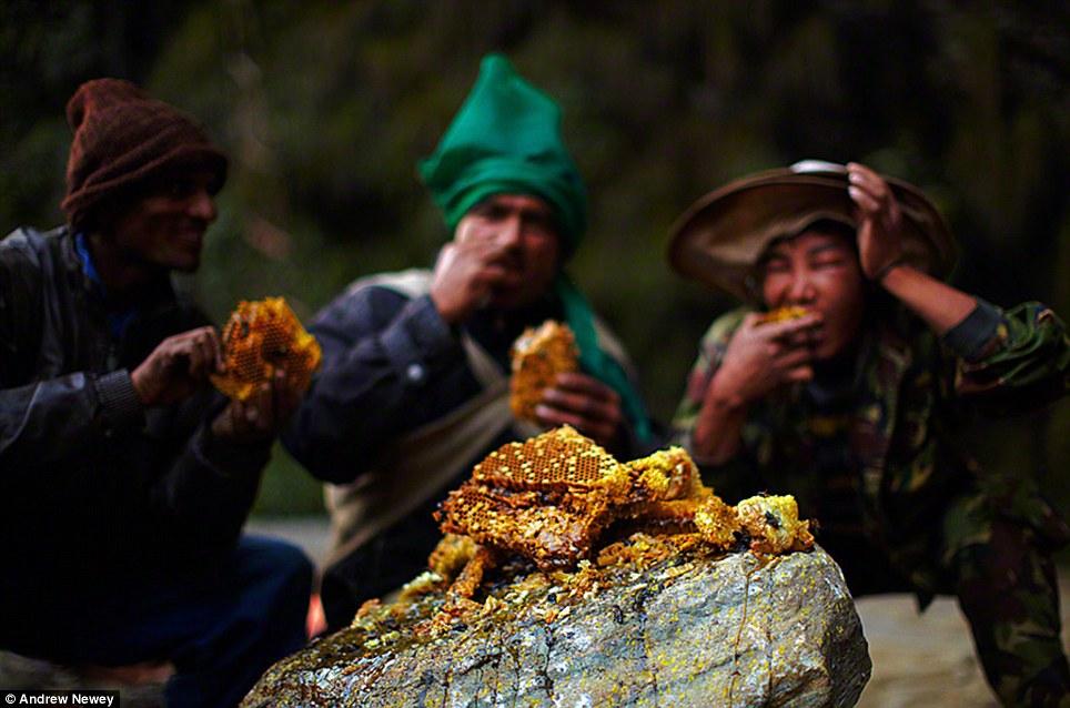 Trong khi đó, chính phủ Nepal đầu tư mạnh vào du lịch, cho phép du khách trực tiếp theo chân người dân địa phương đi săn ong mật. Nó giúp một bộ phận người dân không bị phụ thuộc vào nguồn thực phẩm từ thiên nhiên.