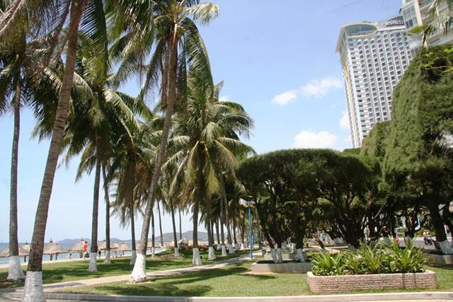 Không gian xanh với hàng dừa và phi lao cổ thụ hiện nay...
