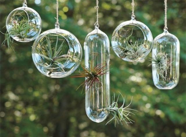 Ngôi nhà nhỏ của bạn sẽ trở nên vô cùng lạ mắt với những cây không khí này.