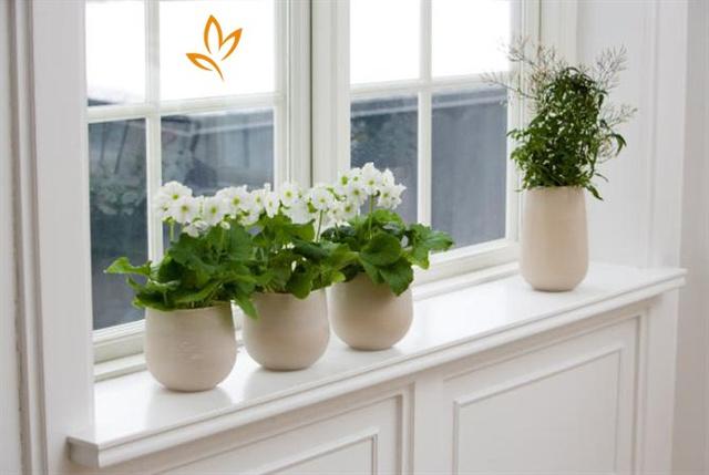 Những chậu cây đáng yêu này bạn có thể đặt trên cửa sổ, bàn học hay bàn làm việc.