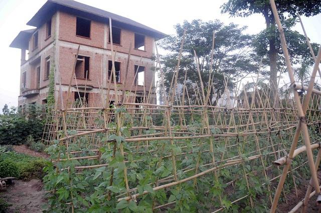 Các căn biệt thự đang được xây dựng dở dang giờ bị che lấp bởi cây dại.
