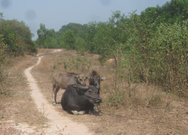 Khu vực được quy hoạch thành công viên Sài Gòn Safari dù đã được cắm mốc lộ giới và giăng hàng rào kẽm gai nhưng bên trong chỉ là bãi đất bị bỏ hoang, cỏ mọc um tùm và loài thú duy nhất trong khu này là... trâu!
