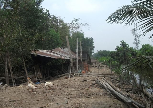 Bà Nguyễn Thị Hảo, chủ căn chòi cho biết đã sống ở đây 20 năm. Trước khi quy hoạch Dự án khu Đô thị Đại học quốc tế Việt Nam , toàn bộ khu vực rộng lớn này được người dân canh tác nông nghiệp, chủ yếu là xoài cát, mía, mì. Từ ngày vướng quy hoạch, cư dân tản mác. Thời gian đầu người ở thành phố còn mướn nhân công coi đất, làm vườn, sau cũng bỏ luôn. Nước phèn và sâu bọ phá hư hết cây cối chỉ còn tràm và cỏ dại sinh sống.