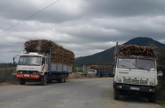 Trong những ngày Tết xe chở mía vô tư chở quá tải trên địa bàn Gia Lai