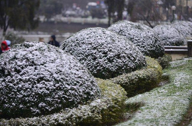 Tuyết phủ trắng cây cối tại Sapa. Ảnh: Lê Nguyễn