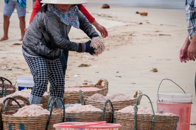 Những bức ảnh bắt quả tang ngư dân đang nhuộm màu cho con ruốc ngay tại bãi biển được cư dân mạng chia sẻ với tốc độ chóng mặt. Ảnh: Lê My.
