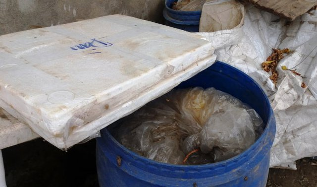 Một thùng chứa măng bốc mùi hôi thối - Ảnh: Doãn Hòa