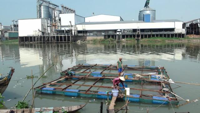 Nhà máy chế biến làm gạo của Công ty CP Toàn Cầu thuộc Long Hòa, Phú Tân (An Giang). Ảnh: Đức Vịnh