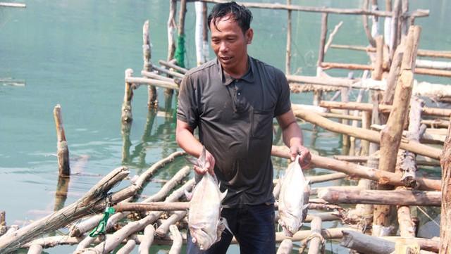 Ông Bùi Văn Vũ (An Cư Đông, Lăng Cô) và những con cá chết - Ảnh: Tuấn Anh