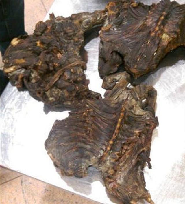 Số thịt khỉ bị hành khách lén lút tuồn vào châu Âu bị thu giữ - Ảnh: Europol