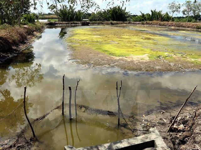 Hạn, mặn nghiêm trọng khiến nhiều đầm nuôi tôm công nghiệp ở Cà Mau bị bỏ hoang. (Ảnh: Kim Há/TTXVN)