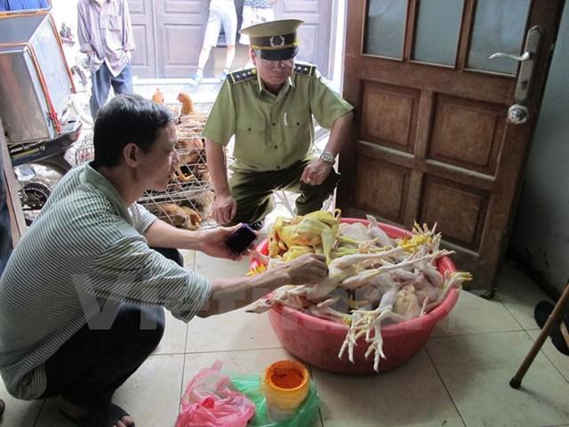 Phát hiện mộtlò giết mổ gia cầm trái phép trên đia bàn Hà Nội sử dụng chất cấmđể nhuộm gà. (Ảnh: Đức Duy/Vietnam+)