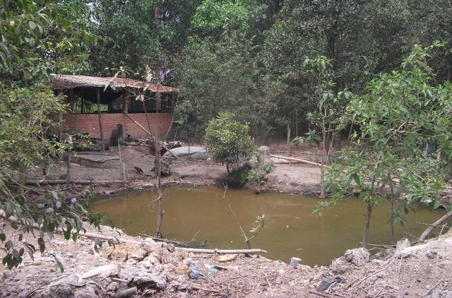 Do đất bỏ hoang nhiều năm liền, người dân quay trở lại dựng lều sống tạm và thả rông trâu bò, gà vịt... Dự án khu Đô thị Đại học quốc tế Việt Nam vẫn mãi là bãi đất hoang!
