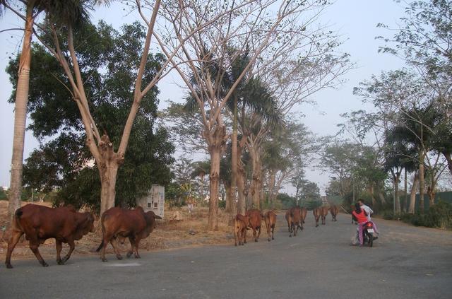 Cũng nằm tại khu dân cư 13E Nguyễn Văn Linh (Bình Chánh), đây là hình ảnh tại dự án khu biệt thự ven sông của QCG.