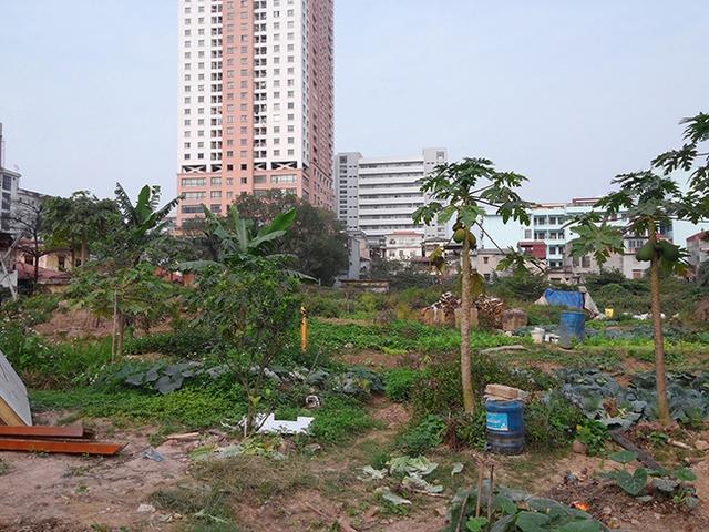Người dân địa phương tận dụng đất dự án để trồng rau.