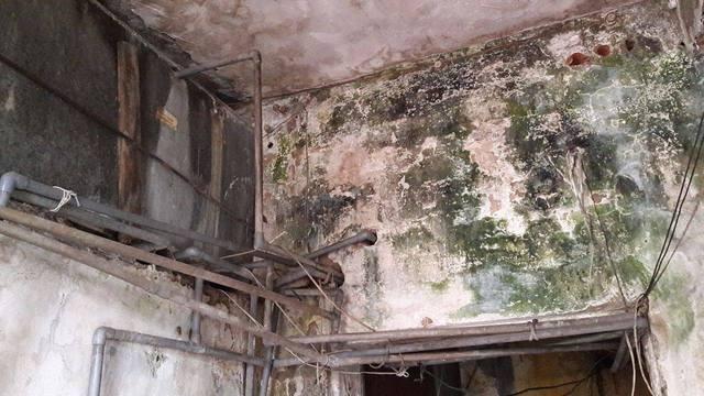 Tường bám đầy rêu phong và chằng chịt ống nước chạy lộ thiên trên trần nhà. Ảnh: T.G