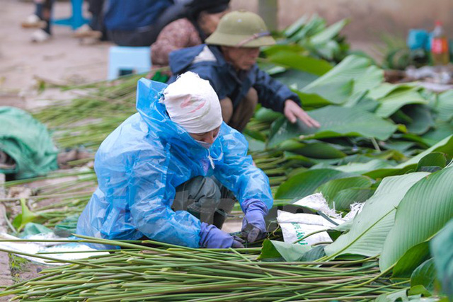 Nhiều năm nay, lá dong Tràng Cát còn tìm đường xuất ngoại, mang lại không khí Tết cho Kiều bào (Ảnh: PV/Vietnam+)