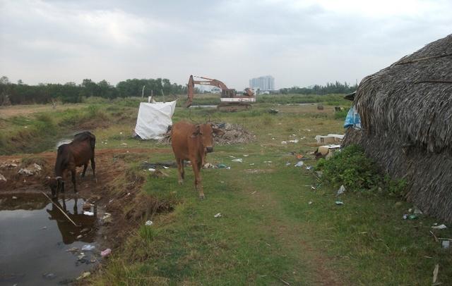 Hình ảnh thường thấy hàng ngày bên trong dự án khu dân cư Phước Kiển (huyện Nhà bè). QCG kỳ vọng dự án này sẽ tạp ra kỳ tích về doanh thu từ quý 2/2016. Tuy nhiên, sau 7 năm dự án vẫn còn rất hoang vu.