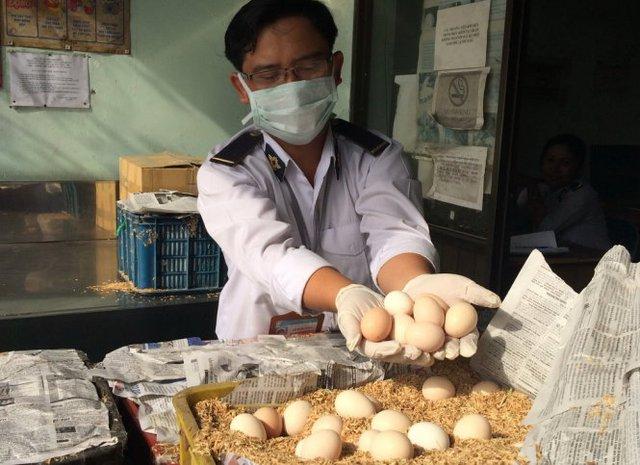 Trứng đựng trong các khay nhựa là trứng gà ác, rất có thể sẽ được bán với mác gà ta - Ảnh: Hoàng Lộc
