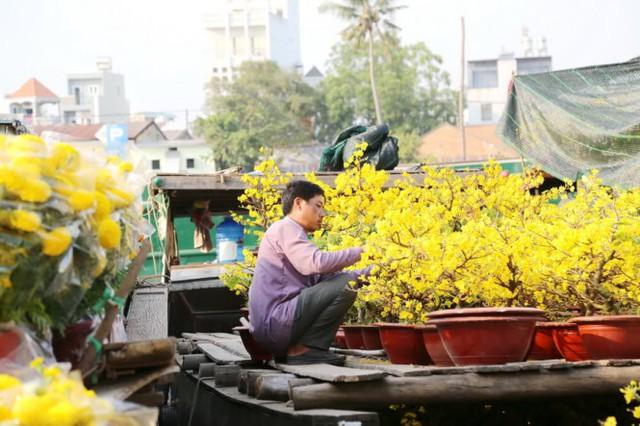 Mai nở bung bét ở chợ hoa Bến Bình Đông, Q.8 mặc dù mới 27 tết - Ảnh: Như Hùng