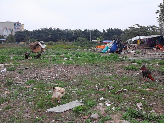 Đất dự án trở thành trại nuôi gà, nuôi vịt.