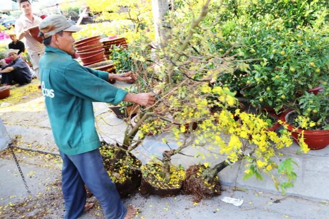 Các chủ vườn rũ hoa khỏi chậu mang về vườn mặc dù mới 27 tết. Ảnh chụp tai chợ hoa Trần Xuân Soạn Q7, TP.HCM - Ảnh: Như Hùng
