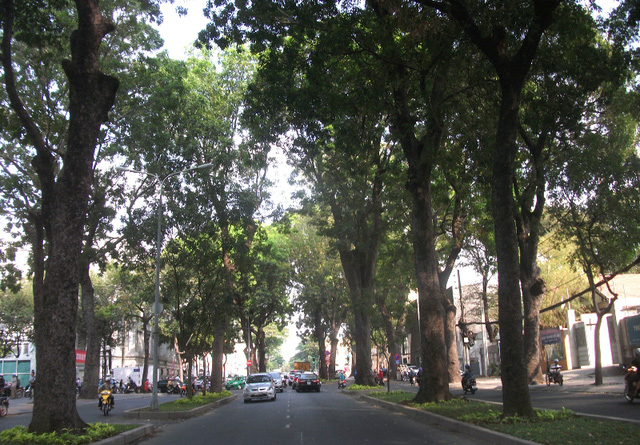 Rồi đây, khi tuyến metro thành hình, những hàng cây luôn tỏa bóng mát như thế này sẽ chỉ còn trong ký ức người dân.