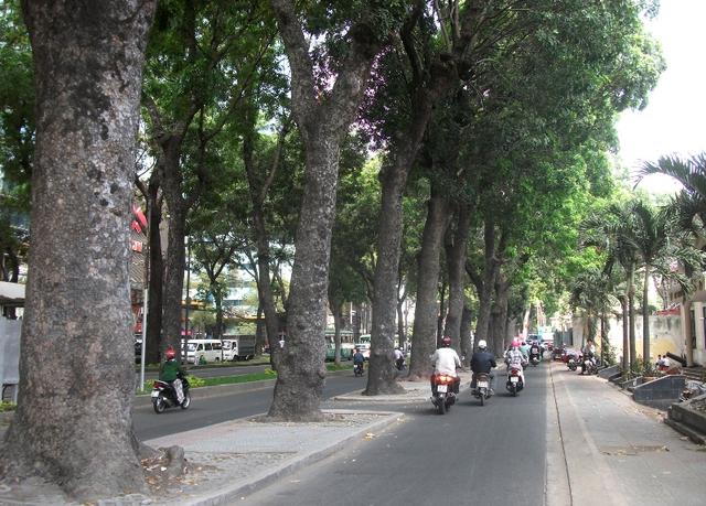 Trong buổi sáng hôm nay, theo quan sát của chúng tôi, hầu như những ai đi ngang qua tuyến đường này đều nhìn hàng cây với vẻ níu kéo...