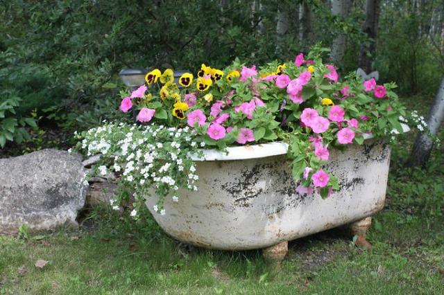 Điểm nhấn thú vị cho khu vườn nhà bạn là bồn tắm cũ trồng đầy những loại hoa rực rỡ.